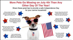 dogs on the 4th